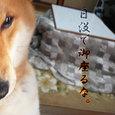 夕暮れしばちゃん(お遊び版)