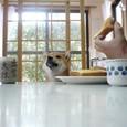 朝ごパンごっくん