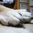 ねむねむのお手手