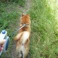 散歩散歩!
