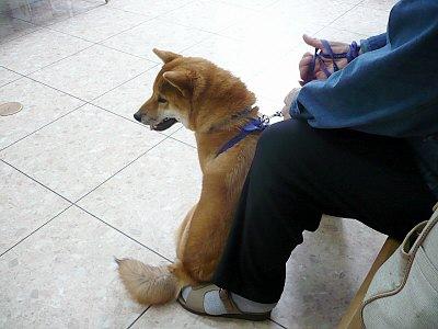動物病院にて