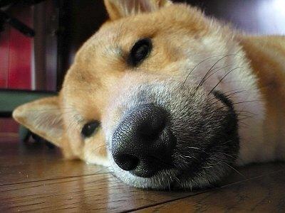 退屈だからおやすみ~