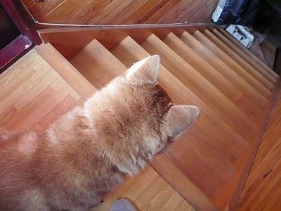 階段高いネ