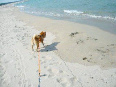 青い海!白い砂!
