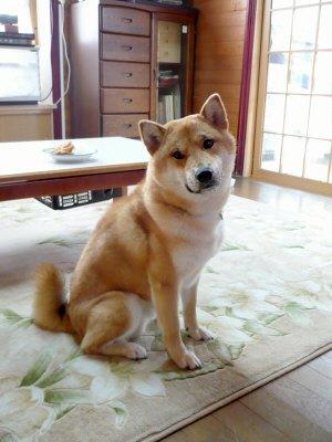 トンカツの番犬