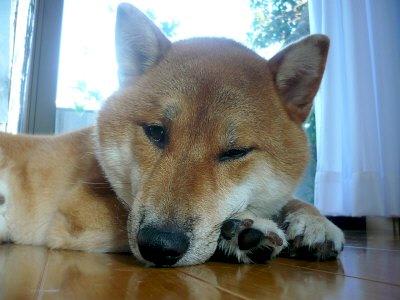 転寝でもするワン